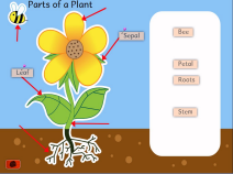 thumbnail_naming_plants1b